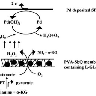 (Left) The sequence of electrochemical redox reactions of