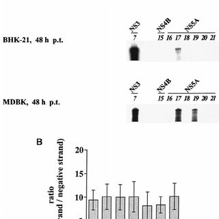 (PDF) Genetic Analysis of the Pestivirus Nonstructural