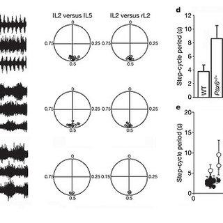 (PDF) V1 spinal neurons regulate the speed of vertebrate