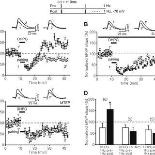 (PDF) Gating of NMDA receptor-mediated hippocampal spike
