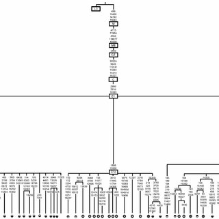 Median joining phylogenetic tree of haplogroup C1 complete