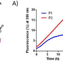 A) Preparation of Trastuzumab-TAMRA conjugates C1 and C2