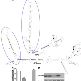(PDF) Human Catechol-O-Methyltransferase Haplotypes
