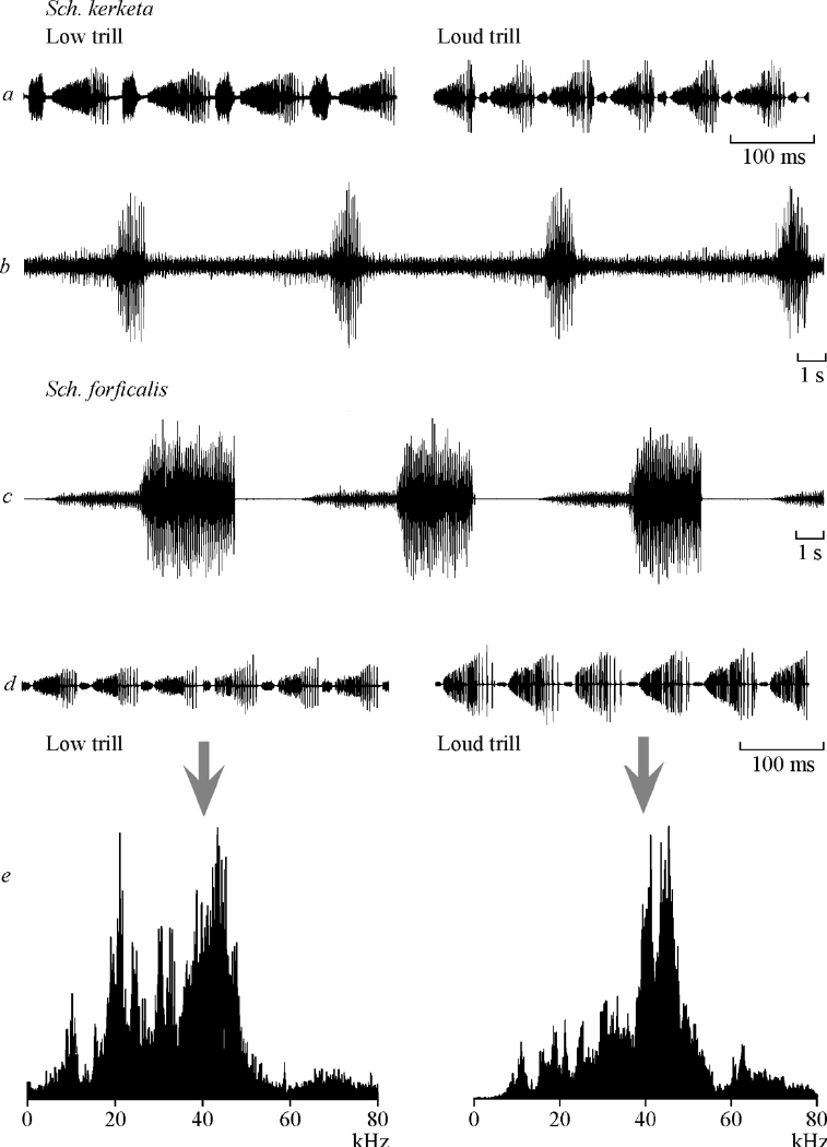 medium resolution of oscillorams a d and frequency spectra e of calling signals in katydids of the png