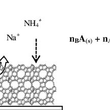 Ion exchange mechanism in the zeolitic layer: A and B are