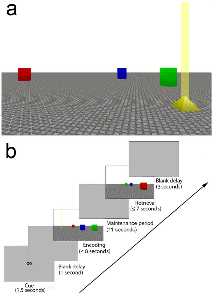 hight resolution of schematic of the virtual environment used in the navigation task a example display