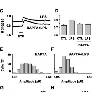 Effect of an ionophore-induced elevation of the basal [Ca