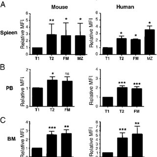 Human markers validate the developmental status of B cell
