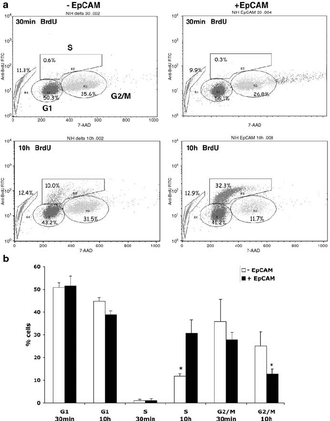 EpCAM expression resulted in an increased BrdU