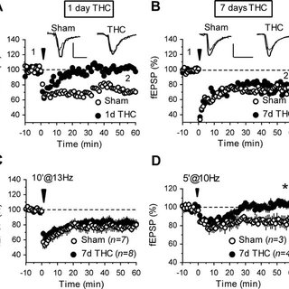 (PDF) Presynaptic Homeostatic Plasticity Rescues Long-Term