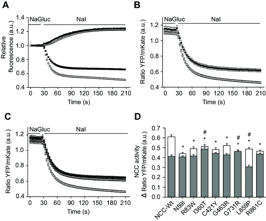 Characterization of the novel functional assay. Addition