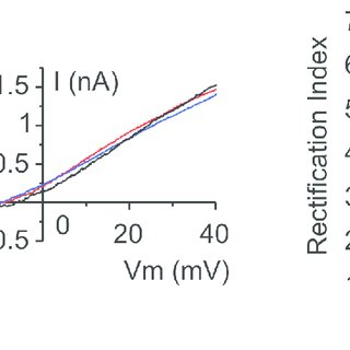 Layer 5 neurons I-V curves are similar in neurons lacking