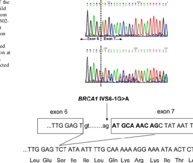 Partial Sequence Of The Rt Pcr Products Of The Wild Type And Mutated Download Scientific Diagram