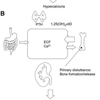 Monogenic diseases that lead to hypercalciuria: Bone as
