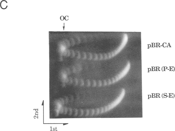 The Illustrated Diagram Of Vertical Gel Electrophoresis B The Gel