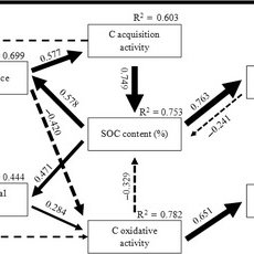 A conceptual model illustrating the interactions between