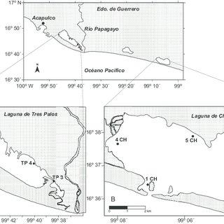 Modelo propuesto del proceso de captura y emisión de CO 2