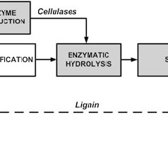 (PDF) Production of Bioethanol from Biomass: An Overview