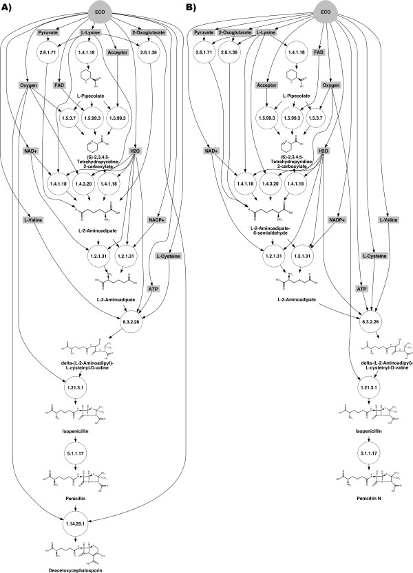Retrosynthetic maps for the production in E. coli of A