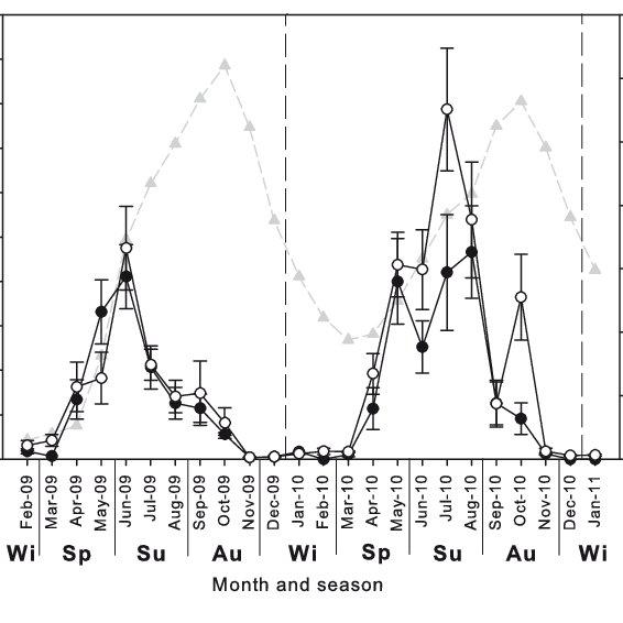 Holothuria leucospilota. Five maturity stages during