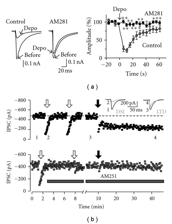 Endocannabinoid-dependent plasticity of GABAergic synapses