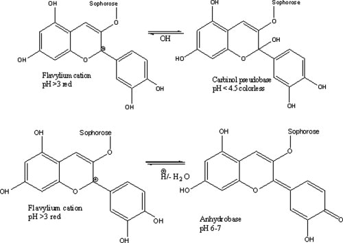 Conformations of cyanidin in aqueous solution under