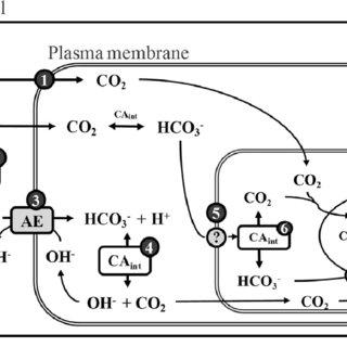 (PDF) Fernandez et al. 2014