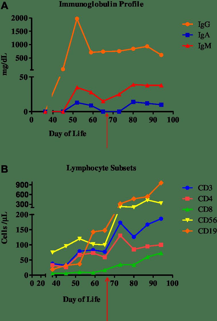 medium resolution of a immunoglobulin levels b lymphocyte subset analysis arrows indicate time of thoracic