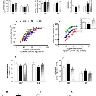 Effect of ω-3 PUFA on mitochondrial functions and energy