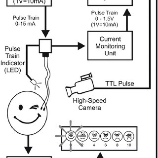 (PDF) Electrical Stimulation of Eye Blink in Individuals