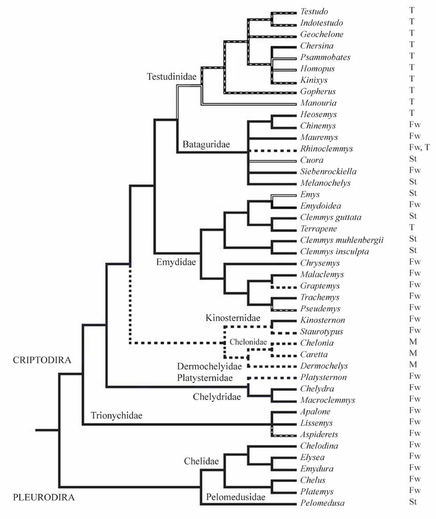 Phylogenetic tree for chelonian genera (see Methods) whose