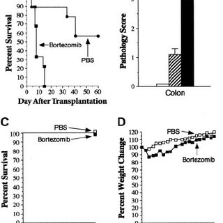 PS-1145 inhibits alloreactive T-cell responses in vitro