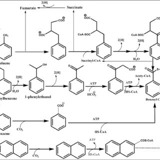 Chemical structures of some single-ringed petrochemical