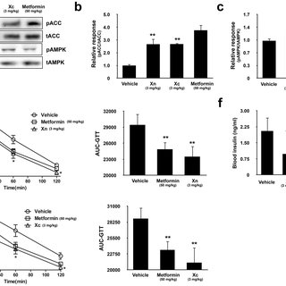 Xn and Xc increase AMPK activity and glucose utilization