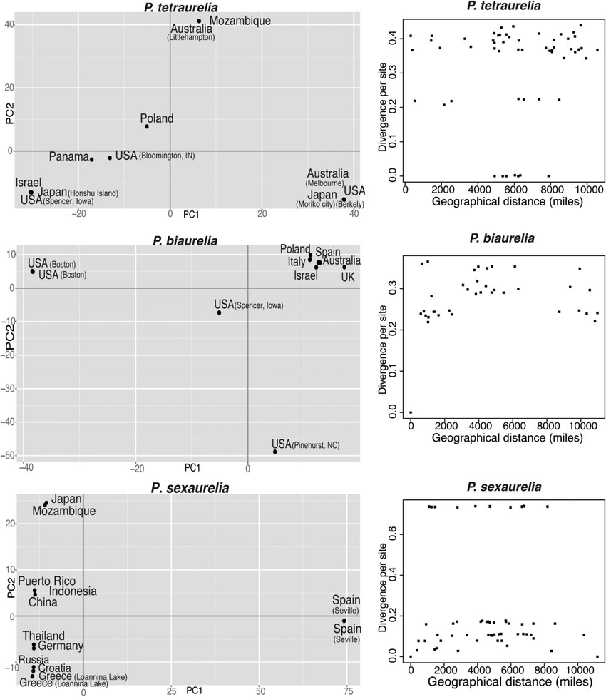 hight resolution of population structure of paramecium species left principal component analysis using genome wide genotypes