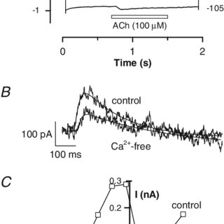(PDF) Conductance Properties of the Acetylcholine Receptor