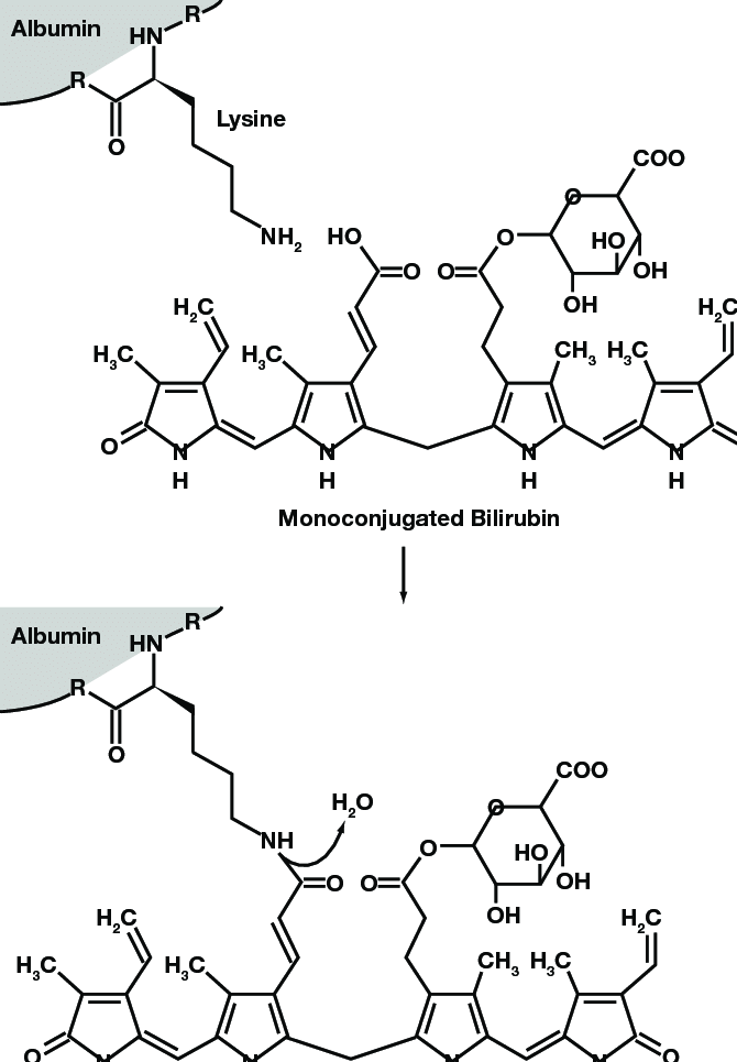 Biliprotein structure: nucleophilic condensation reaction