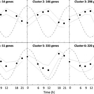 Cyclic variation in cell cycle distribution and cell cycle
