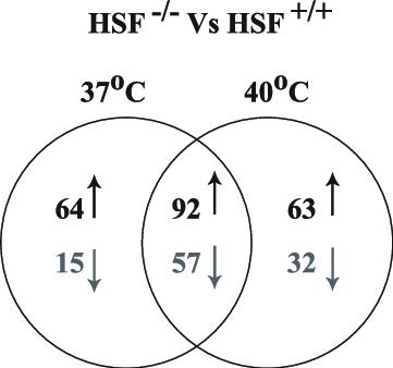 Venn diagram representing the probe sets that showed