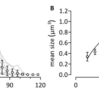 15: Antibody Staining Against VGAT and VGLUT-1 in the MD