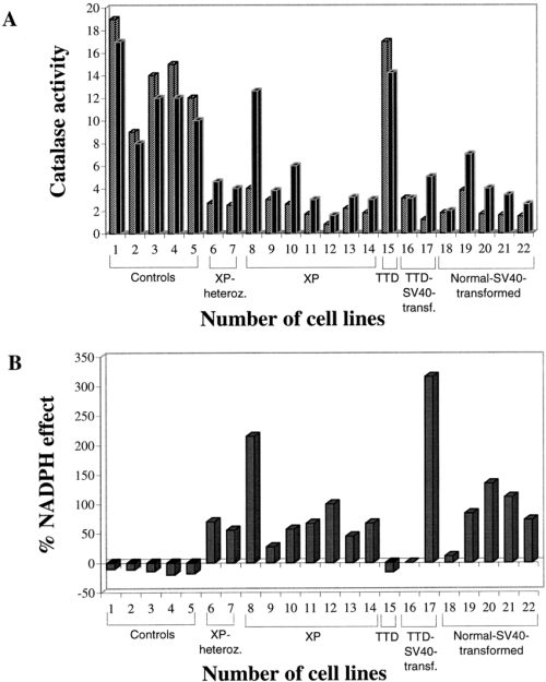 small resolution of catalase activities of 300 g supernatants of acellular extracts of human cell strains for their descriptions see table 1 after 10 min incubation at 25 c
