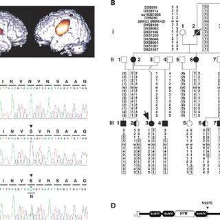 (PDF) SRPX2 mutations in disorders of language cortex and