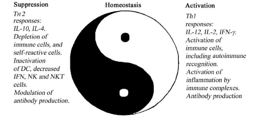 Minecraft yin yang schematic diagrams