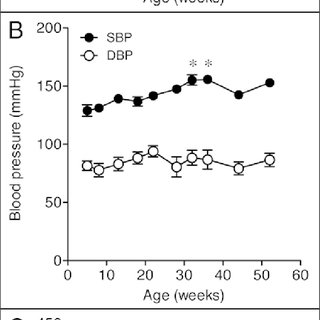 (PDF) Aging increases Oxidative Stress and Renal