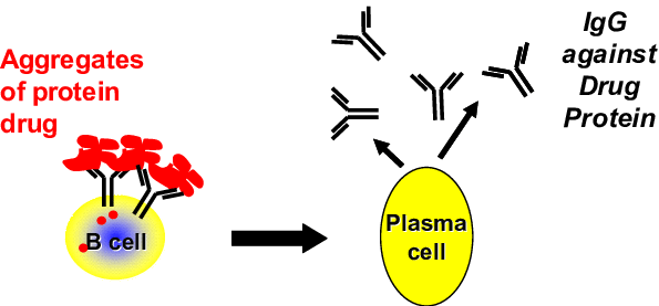 Mechanism of T cell independent formation of anti-drug ...