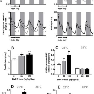 (PDF) BMP7 Activates Brown Adipose Tissue and Reduces Diet