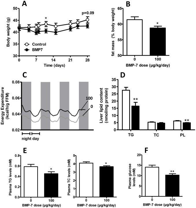 8-week-old male C57Bl/6J mice were fed a high-fat diet (45