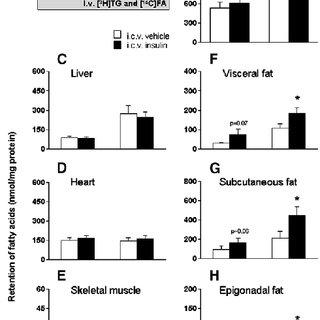 (PDF) Circulating insulin stimulates fatty acid retention