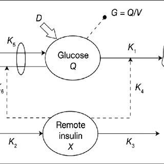 (PDF) A Composite Model of Glucagon-Glucose Dynamics for