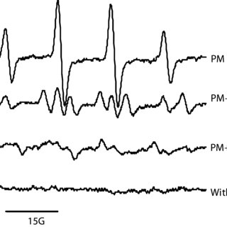 The time evolution of the EPR signal by several soluble